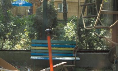 Woliera słynącej z intelektu papugi kei w Łódzkim Ogrodzie Zoologicznym wygląda jak kolorowy plac zabaw.