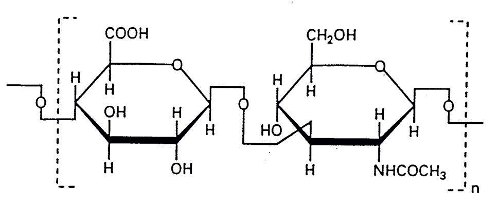 Rys. 2. Struktura powtarzających się fragmentów disacharydowych w cząsteczce kwasu hialuronowego.