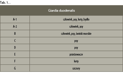 giardioza-1