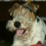 Rozpoznawanie i leczenie jaskry u psów