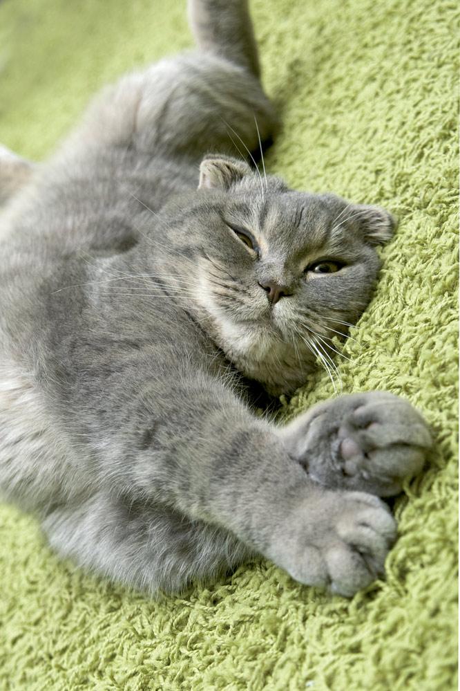 kot_cukrzyca2