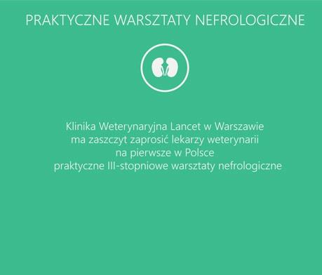 warsztaty nefrologiczne_SLIDER