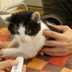 Zastosowanie laseroterapii i laseropunktury u zwierząt z niedowładem lub porażeniem kończyn – wybrane przypadki