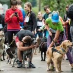 W tym biegu każdy jest zwycięzcą. II edycja DOG RUN