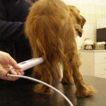 Laseropunktura u zwierząt z przewlekłymi zmianami zwyrodnieniowymi
