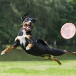 """Mobilna Klinika Bayer zaprasza na bezpłatne konsultacje weterynaryjne podczas zawodów """"Latające Psy"""""""