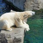 Menu na upały dla zwierząt w zoo: mrożone ryby i lody z owocami