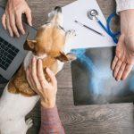 Weterynarz online. Przyjmuj pacjentów przez internet z AnyMind.