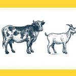 """""""Osobowość na talerzu"""", czyli o mięsnych wyborach"""