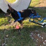 Ultralekkie, dopasowane do indywidualnych potrzeb i przede wszystkim komfortowe wózki inwalidzkie dla zwierząt