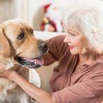 Pies – superprzyjaciel człowieka
