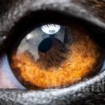 Jak widzi pies