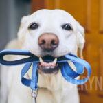 Ile kosztuje sterylizacja psa
