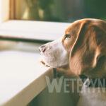 Choroby neurologiczne u psów