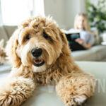 Jak uszyć legowisko dla psa?