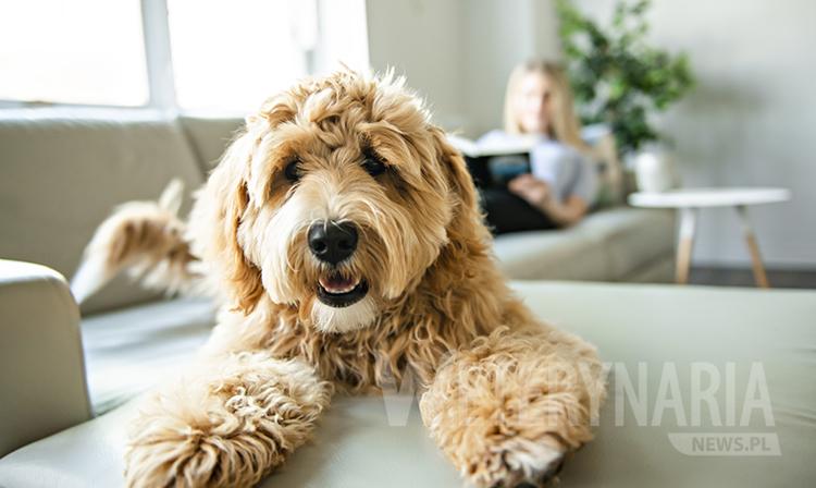 Domowe sposoby na sierść dla psa