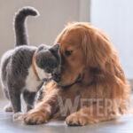 Choroby przenoszone przez psy i koty część 1