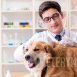 Dlaczego pies wymiotuje?