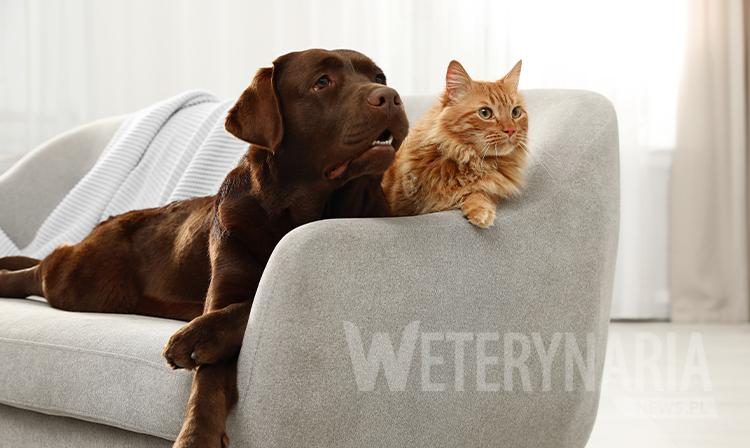 Zoonozy, czyli choroby przenoszone przez psy i koty część 2