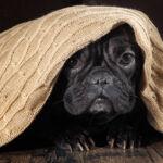 Fobia akustyczna u zwierząt domowych