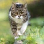 Jak poradzić sobie z pasożytami zewnętrznymi u kota?