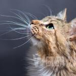Kiedy zastosować preparaty na pasożyty wewnętrzne u kota?