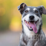 Dirofilarioza sercowa u psa – groźna choroba przenoszona przez komary