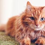 Przyczyny biegunki u kota – choroba, robaki, odrobaczanie, zatrucie