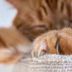 Zatwardzenie u kota – symptomy, choroby, diagnostyka