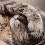 Robaki u kota – rodzaje, transmisja, profilaktyka