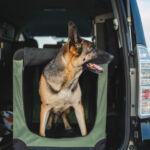 Wakacyjne podróże z psem i kotem