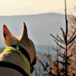 Pies w górach? Sprawdź, o czym należy pamiętać